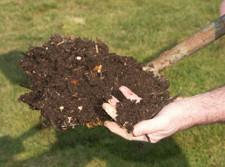 Compost mûr