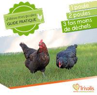 Guide poule - version adulte