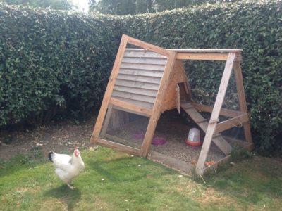 Poulailler dans un jardin avec une poule
