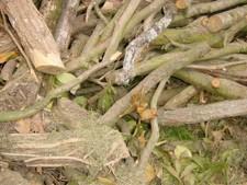 branches destination broyage